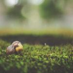 Wyścigi ślimaków