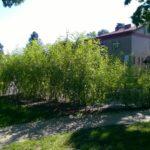 Schowajcie lornetki, mili sąsiedzi