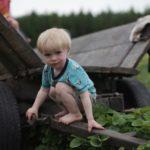 Dzikie Lato. 25 propozycji wyjazdów iwarsztatów rodzinnych znaturą wroli głównej