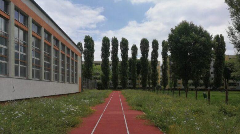 ogród szkolny