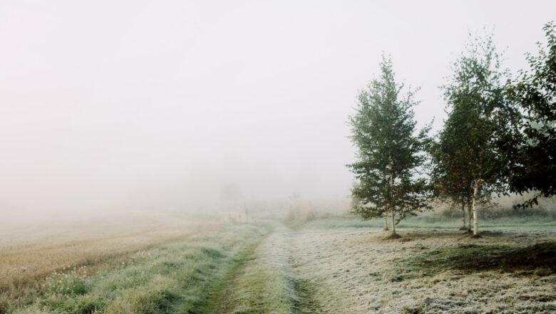Leśne Warsztaty