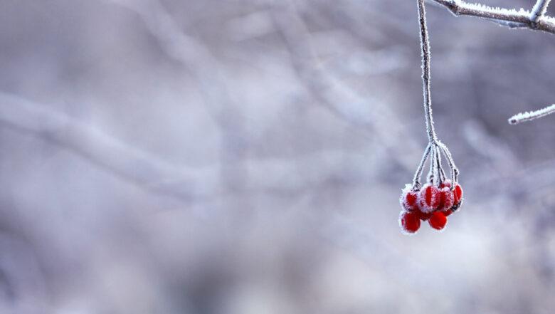 zimowe leśne harce